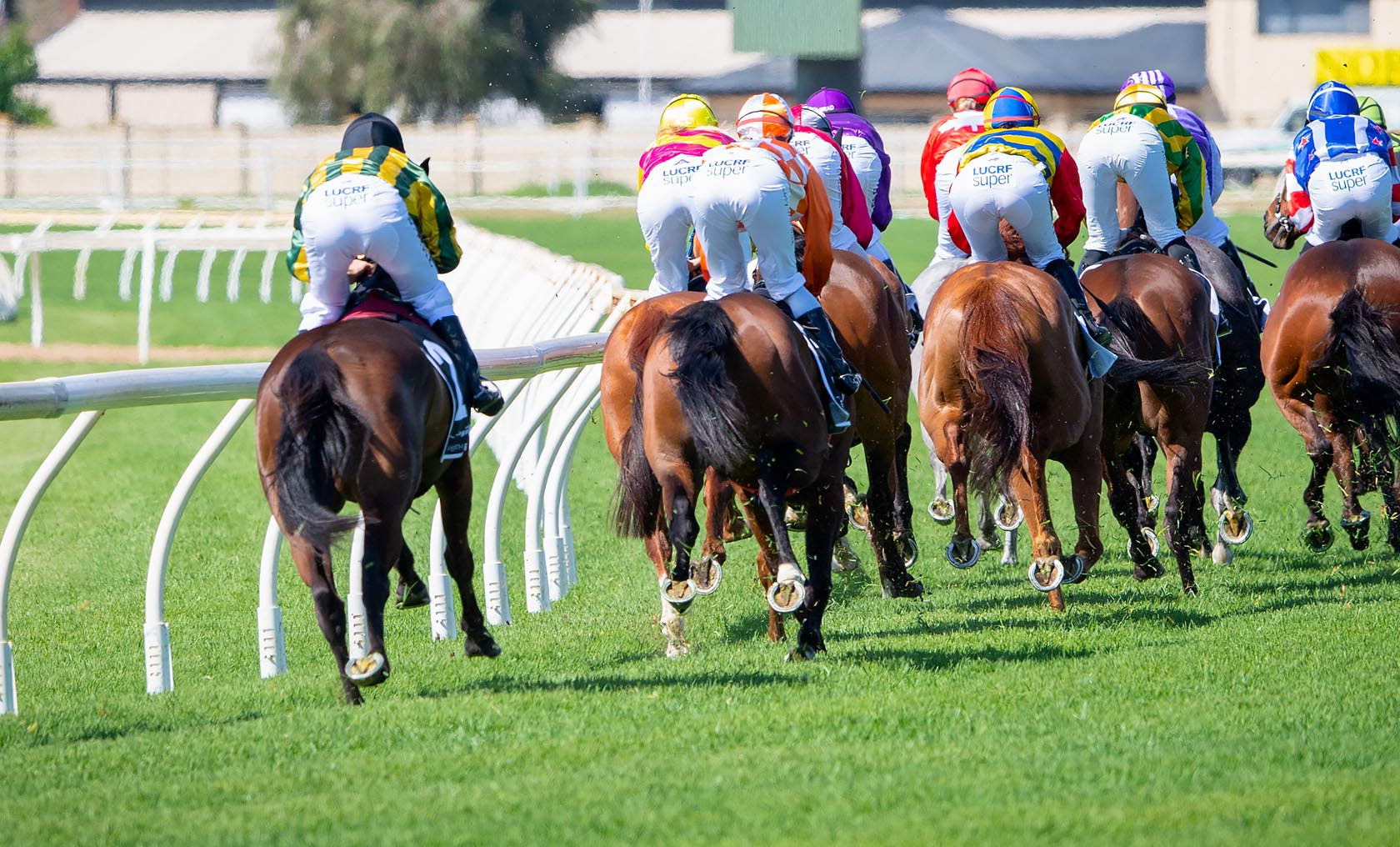 Viewing racing horses from behind